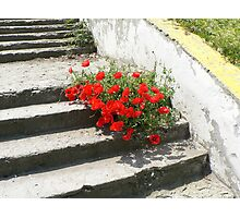 A burst of life on the concrete steps Photographic Print