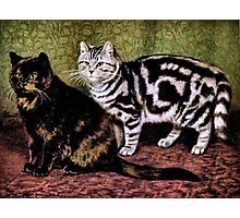 Tortoiseshell and Silver Tabby Cats Photographic Print