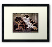Tortoiseshell Persion Cats Art Framed Print