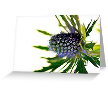 Sharp Colour Greeting Card
