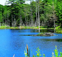 A Pond in Maine by Patty Gross