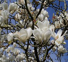 Magnolia Time by hootonles