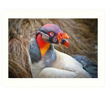 King Vulture Portrait .......  Art Print