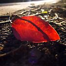 Leaf Litter by Digby