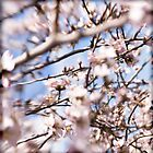 dizzy under the almond tree... by fiorello