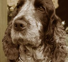 Bailey by Rebecca Waddington