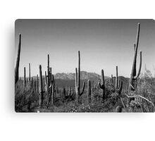 Cactus BW Canvas Print
