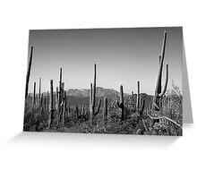 Cactus BW Greeting Card