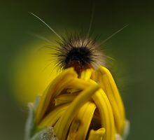 Bad Hair Day! by Jon Staniland
