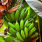 Fresh Bananas by Trudy Wilkerson
