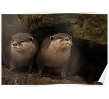 twice as otter Poster