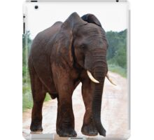 'Gimme Shelter' iPad Case/Skin