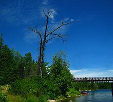 Old Rail Bridge by David Jackson