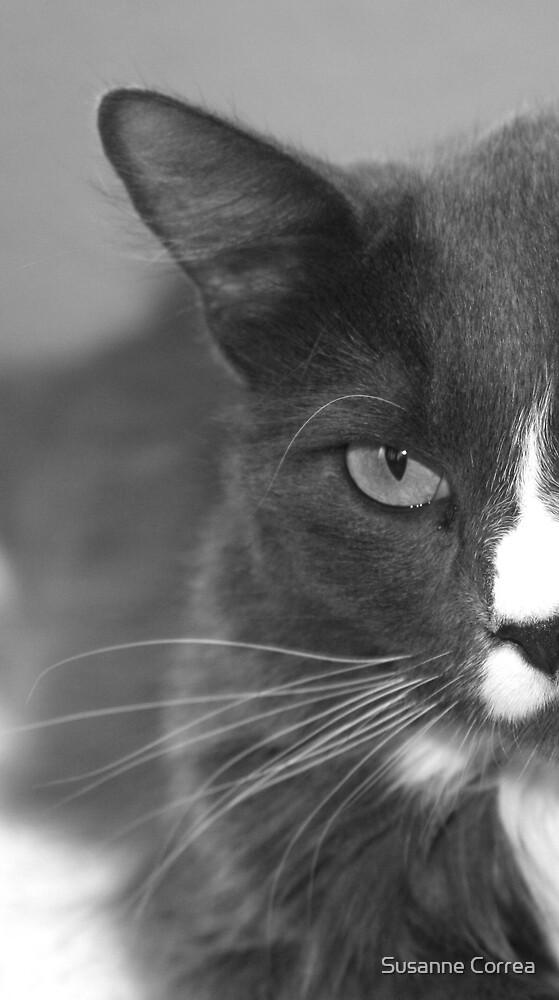 Kitty-Kat by Susanne Correa
