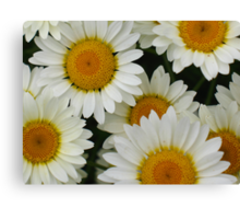 Happy Daisy  © Canvas Print