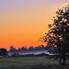Misty sunrise by Sheri Nye