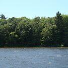 Nature on the Lake by tawaslake