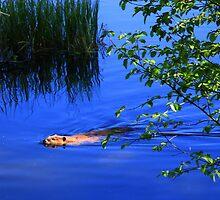 The Beaver Pond by Gene Praag