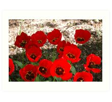 Clutch of Poppies Art Print