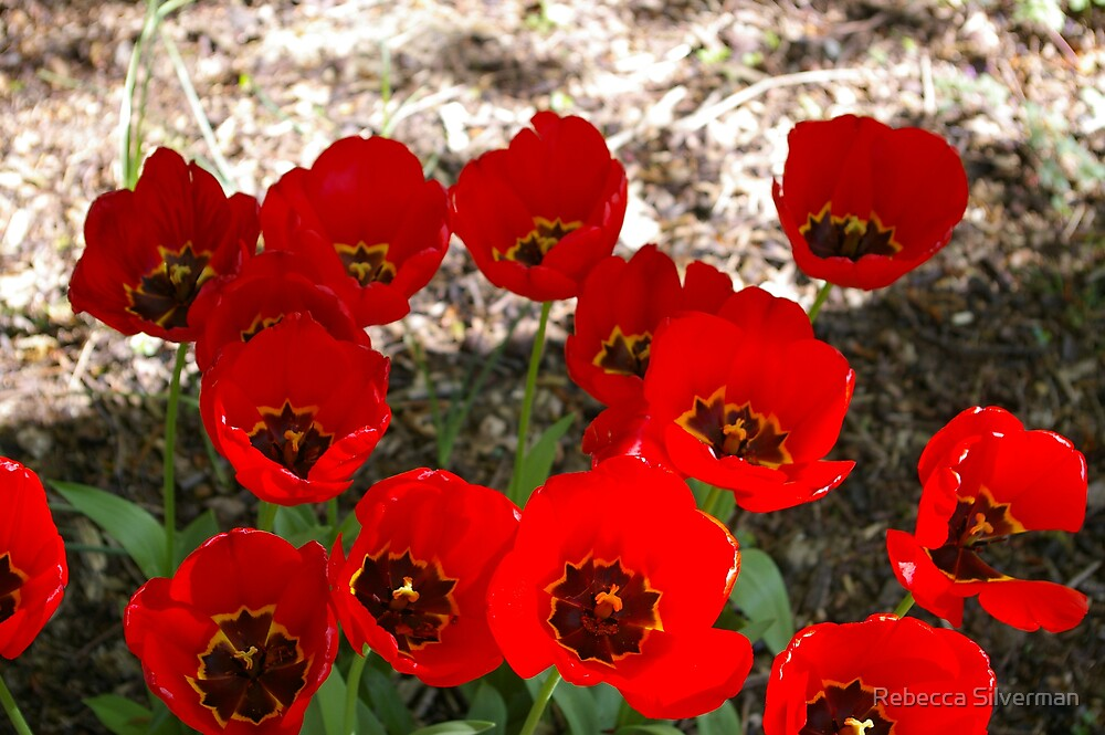Clutch of Poppies by Rebecca Silverman