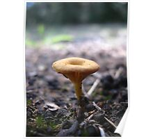 Little Cup Fungi Poster
