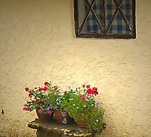 Cottage window by triciamary