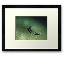 Special Spiny Dogfish Framed Print