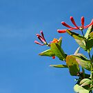 Honeysuckle and blue sky by 4scooty