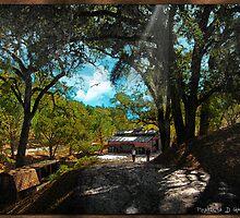 Tree Lined Lane by Rhonda Strickland