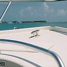 boatin by Amber Finan