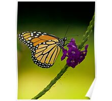 Bokehed Monarch Poster