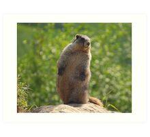 Marmot 1 Art Print