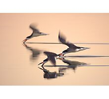 Black Skimmers Photographic Print