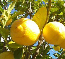 Lemon's In Winter Time by speedyhorse8