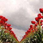 Tulip Heaven by Tamela J Wolff