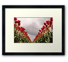 Tulip Heaven Framed Print