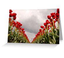 Tulip Heaven Greeting Card