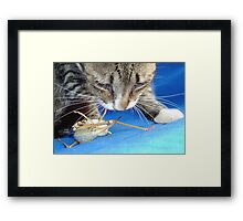 Close Up of A Tabby Cat and Katydid Framed Print