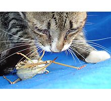 Close Up of A Tabby Cat and Katydid Photographic Print