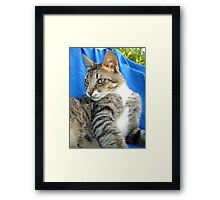 Tabby Cat Against Blue Cloth Background Framed Print