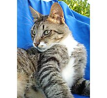 Tabby Cat Against Blue Cloth Background Photographic Print