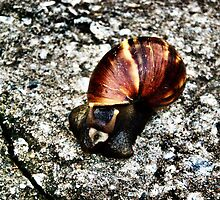 A Big Garden Land Snail by exaltedshrimp