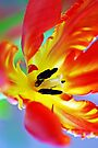 Flaming by Renee Hubbard Fine Art Photography