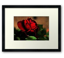 Blood Red Rose Framed Print