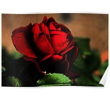 Blood Red Rose Poster