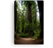 Redwood National Forest Canvas Print
