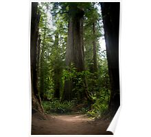 Redwood National Forest Poster
