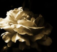 Sepia Rose by Evita