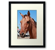 Equine Gaze Framed Print