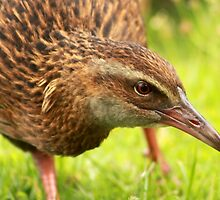 Weka by Bryony Griffiths